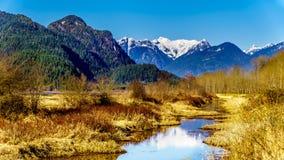 Snöa dolda guld- öron berg och kantmaximumet som ses från fördämningen av Pitt-Addington träsk i Fraser Valley nära lönn Ridge royaltyfri fotografi
