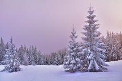 Snöa dolda träd i den dimmiga skogen på solnedgången Royaltyfri Foto