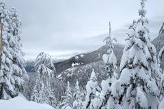 Snöa dolda träd och berg på svart bergsnöskoslinga Arkivfoton