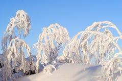 Snöa dolda träd på en klar frostig dag arkivbild