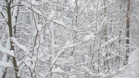 Snöa i skoghögar av nedgången för snö ibland lager videofilmer