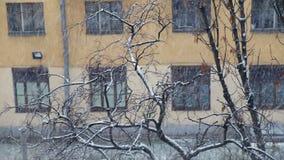 Snöa i staden, flervånings- byggnad och trädcloseupen, vinter arkivfilmer