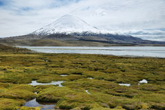 Snöa korkade höga berg reflekterade i sjön Chungara Arkivfoto