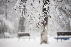 Snöa landskap Detaljer på filialerna Royaltyfri Bild