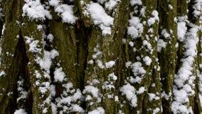 Snöa nedgångar i ultrarapid på bakgrund av trädskället stock video