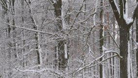Snöa nedgångar på bakgrund av den lugna avlövade skogen arkivfilmer