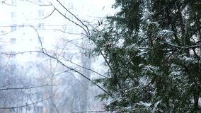 Snöa och rainning samtidigt stock video