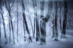 Snöa stormhäftiga snöstormen i djupfryst skog i vinter Arkivbild