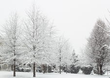 Snöa trädet arkivfoton