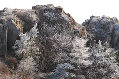 Snöa trädet i vinter Royaltyfria Bilder