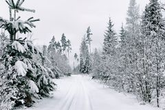Snöa vägen i skogen i vinter i Ryssland Royaltyfri Fotografi