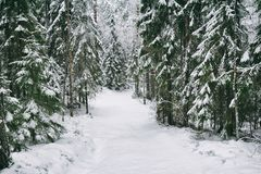 Snöa vägen i skogen i vinter i Ryssland Arkivbild