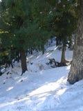 snöa varje var Arkivfoton