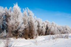 Snöad skog i klar vinterdag Royaltyfri Foto
