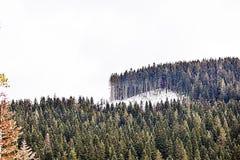 Snöade berg och skogar arkivbild