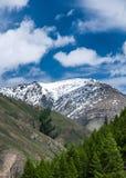 Snöade maxima av Altai berg Royaltyfria Foton