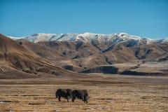 Snöberg, blå himmel, yak, berg, resa arkivfoto