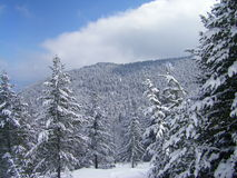 Snöberg, träd och blå himmel Arkivbild