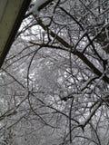 Snödag Arkivfoto