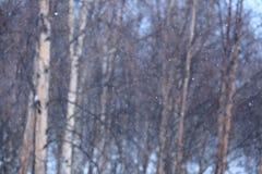 Snödag Royaltyfria Foton