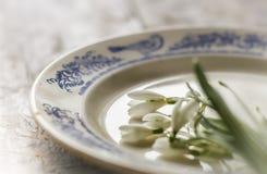 Snödroppar blommar på plattan Fotografering för Bildbyråer