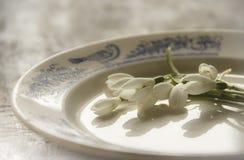 Snödroppar blommar på plattan Arkivfoton