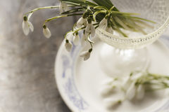 Snödroppar blommar på plattan Royaltyfri Bild