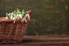 Snödroppar fjädrar blommor i korg på trätabellbakgrund Arkivfoto