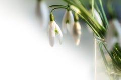 Snödroppar i den glass vasen, closeup med copyspace Arkivfoto
