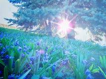 Snödroppar på gräsmattan i strålarna av den ljusa vårsolen arkivbild