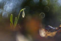 Snödroppar som fotograferas med en inversed projektorlins arkivfoton