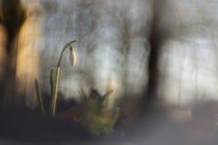 Snödroppar som fotograferas med en inversed projektorlins royaltyfri foto