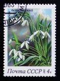Snödroppen från serien fjädrar blommor, circa 1983 Arkivfoton