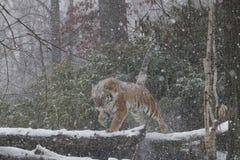 Snöförkläde Royaltyfri Bild