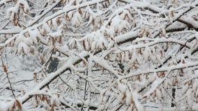 Snöfall över filialer arkivfilmer