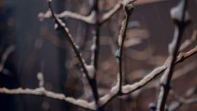 Snöfall för lyktanattvinter stock video