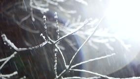 Snöfall för lyktanattvinter lager videofilmer
