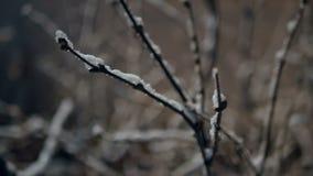 Snöfall för lyktanattvinter arkivfilmer