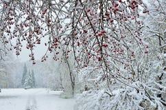 Snöfall i bakgrund för stadspark-vinter Royaltyfria Foton