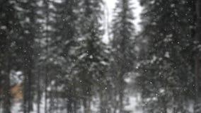 Snöfall i Forestet Park Tungt härligt snöfall på suddigt sörjer på bakgrunden royaltyfri foto
