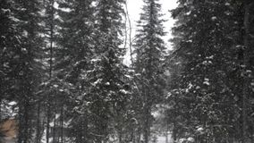 Snöfall i Forestet Park Vinterlandskapet, i snö-täckt, parkerar Den tunga härliga snöfalländringsfokusen till sörjer arkivfilmer