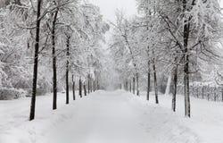 Snöfall i parkera, snöig vinterväg, snö täckt trädlandskap kallt begrepp för säsongvinterväder arkivbilder