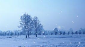 Snöfall i parkerar på gryning lager videofilmer