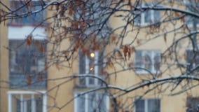 Snöfall i staden på bakgrunden av flervånings- byggnad stock video