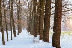 Snöfall i tidig vinter, Catherine Park, Pushkin Royaltyfria Bilder