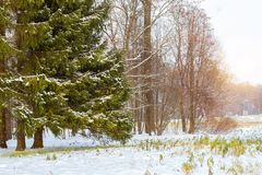 Snöfall i tidig vinter, Catherine Park, Pushkin Fotografering för Bildbyråer