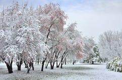 Snöfall i vinter parkerar Arkivbild