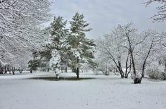 Snöfall i vinter parkerar Royaltyfri Bild