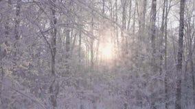 Snöfall i vinter parkerar till och med strålarna för sol` s på bakgrund för blå himmel lager videofilmer