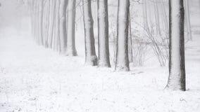 Snöfall i vintern i skogen, mjuk snöig julmorgon med fallande snö stock video